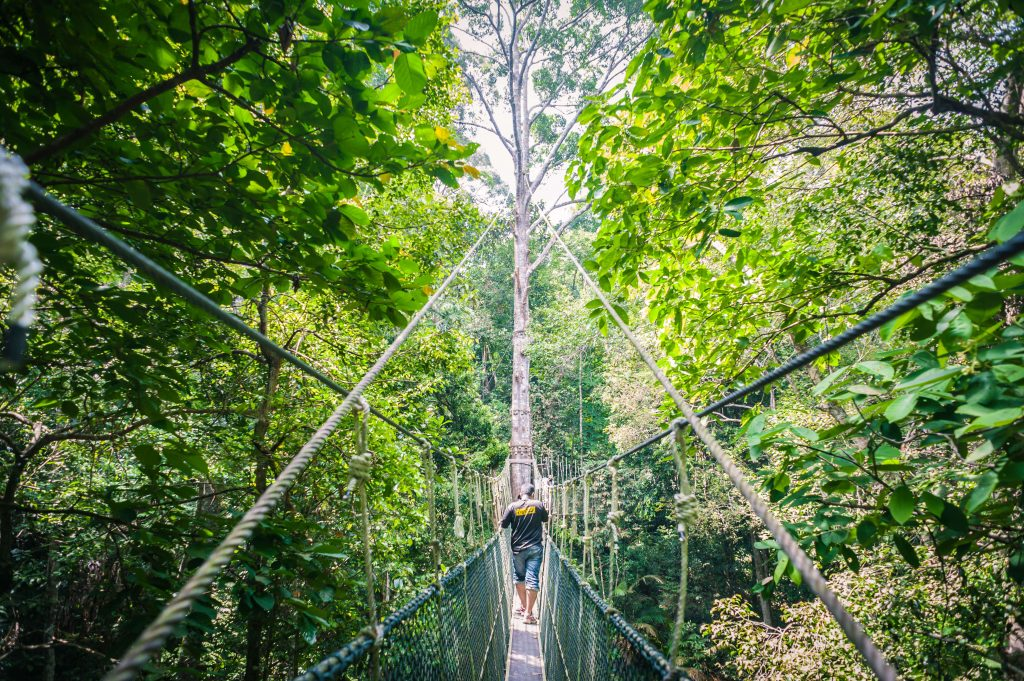 Canopy Walk at Penang National Park park Parks and Nature Attractions in Penang 185204549 high 1024x681